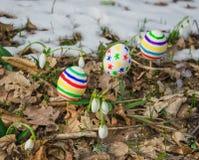 Пасхальные яйца с snowdrops Стоковое Изображение RF