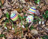 Пасхальные яйца с snowdrops Стоковые Изображения RF