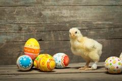 пасхальные яйца цыпленка Стоковое Изображение RF