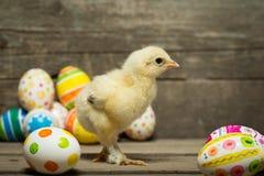 пасхальные яйца цыпленка Стоковое фото RF