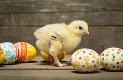 пасхальные яйца цыпленка Стоковое Изображение