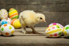 пасхальные яйца цыпленка Стоковые Фото