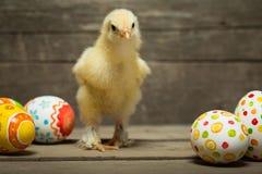 пасхальные яйца цыпленка Стоковое Фото