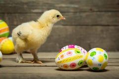 пасхальные яйца цыпленка Стоковые Фотографии RF