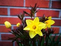 Пасха lilly и цветение пиона Стоковые Изображения