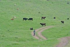 Пася коровы и маленькая девочка Стоковая Фотография RF