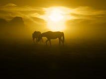 2 пася лошади в sunrise_toned Стоковая Фотография