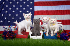 Патриотические котята 4 Стоковые Изображения