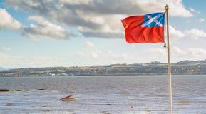 Патриотический человек смотря флаг Шотландии Стоковые Фото