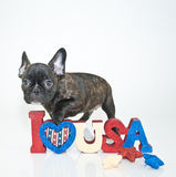 Патриотический щенок Стоковое Изображение RF
