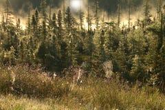 Пауки в тумане Стоковые Фотографии RF