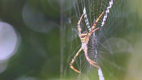 Пауки на паутине видеоматериал