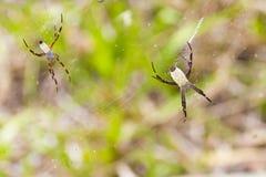 Пауки Стоковое фото RF