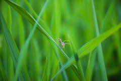 Паук в зеленом поле Стоковые Фотографии RF
