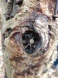 Паук в отверстии дерева стоковые фотографии rf