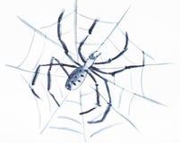 Паук в сети на белой бумаге бесплатная иллюстрация