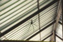 Паук в сети под крышей дома Стоковые Изображения