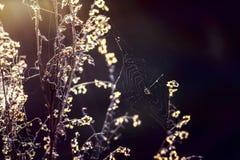 Паук в сети солнечного Стоковые Фото