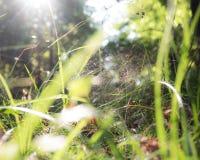 Паук в траве полесья Стоковые Изображения