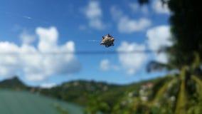 Паук в тропическом острове Стоковые Изображения