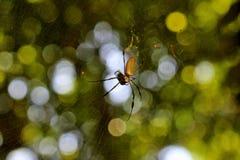 Паук и муха Стоковые Фотографии RF