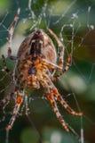 Паук и паутина в саде дома стоковая фотография rf