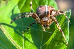 Паук и паутина в саде дома стоковое изображение