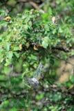 Паук и цикада Стоковые Изображения