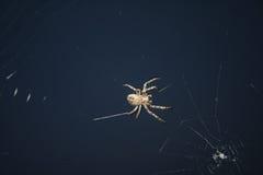 Паук насекомых дизайна Стоковое Фото
