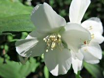 Паук на белом цветке Стоковая Фотография RF