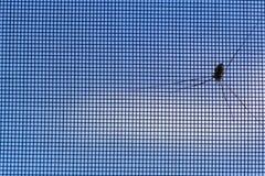 Паук на вне сетки от комаров на предпосылке голубого неба стоковое фото rf