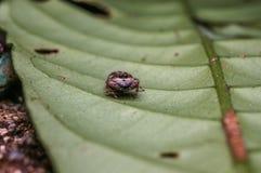 Паук на лесе Стоковые Изображения RF