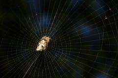 Паук на лесе Стоковые Фото