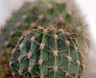 Паук на кактусе стоковое фото