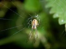 Паук на конце-вверх сети паука Стоковое фото RF