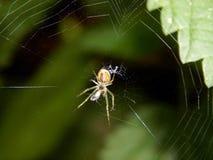 Паук на конце-вверх сети паука Стоковые Изображения
