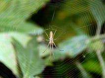 Паук на конце-вверх сети паука Стоковая Фотография RF
