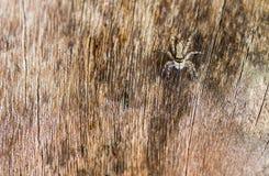 Паук на древесине Стоковые Изображения