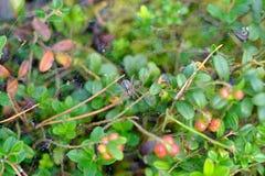Паук на сети в лесе Стоковая Фотография