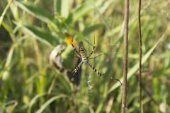 Паук на сети в своей естественной среде обитания стоковое фото rf