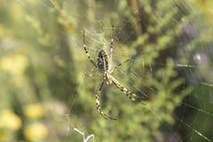 Паук на сети в своей естественной среде обитания стоковая фотография