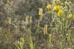 Паук на сети в своей естественной среде обитания стоковая фотография rf