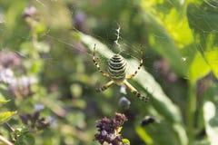 Паук на сети в своей естественной среде обитания стоковые фото