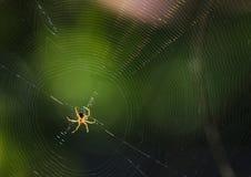 Паук на сети паука в естественном Стоковые Изображения