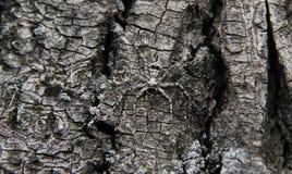 Паук пряча в дереве стоковые фотографии rf