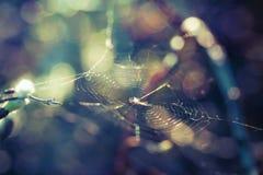 Паук радуги Стоковые Фото