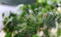 Паук сада Стоковое фото RF