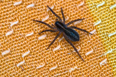 Паук сидя на оранжевой съемке макроса конца-вверх ткани Стоковое Фото