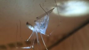 Паук со своей добычей, другой паук черепа людоеда черепа видеоматериал