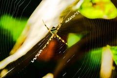 Паук стоя на spiderweb Стоковая Фотография